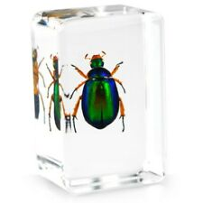 Green Rose Chafer Beetle Insect Specimens In Lucite Paperweight Crafts
