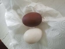 French Black Copper Marans Fertile Hatching Eggs 6 Extras Breed Standard