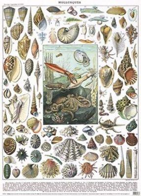 1 Foglio Di Lusso Molluschi Seashell Carta Da Pacco Regalo Wrap Musei Gallerie &- Perfetto Nella Lavorazione