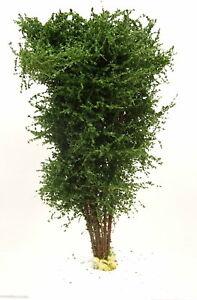 Polak-9514-Premium-Laubbaum-buchengruen-8-10cm-Handarbeit-teilw-Naturmaterial
