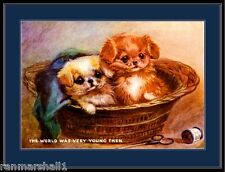 Vintage English Print Pekingese Puppy Dogs Art Picture