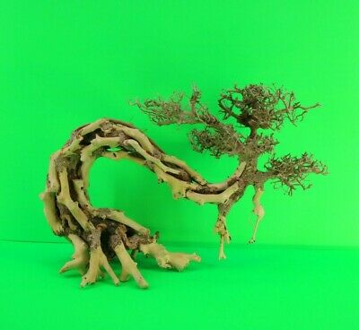 Aquarium Driftwood Bonsai Tree Aquascape Fish Planted Freshwater Z2b12 0192 Ebay