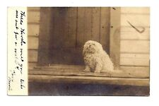 Vintage RPPC DOG PUPPY Toy Mix Poodle Real Photo Postcard Fischer Omaha Nebraska