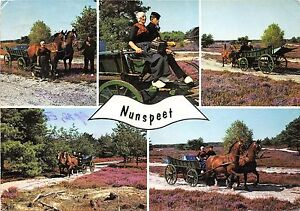 B48149-Nunspeet-horses-with-carriage-chevaux-avec-charets-multiviews-netherland