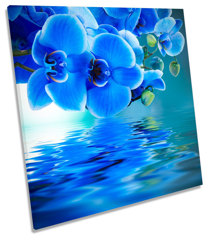 Floral Flower Reflection SQUARE CANVAS Wand Kunst Boxed Framed