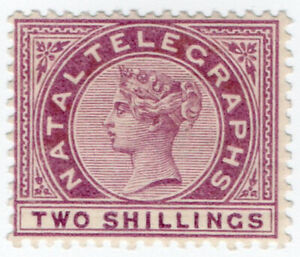I-B-Natal-Telegraphs-2-Purple