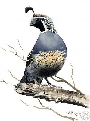 QUAIL Wildlife Painting ART 11 X 14 Print by Artist DJR