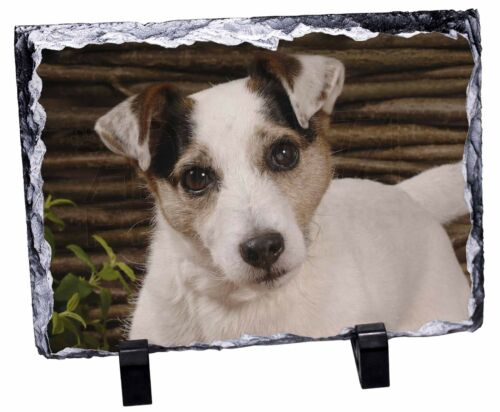 Jack Russell Terrier Dog Photo Slate Christmas Gift Ornament, ADJR56SL