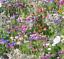 Cottage Garden Bee /& Papillon Plante Vivace Mélange Fleurs sauvages Graines 5 g 500 g