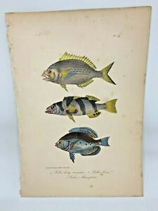 Fish-Plate-74-Lacepede-1832-Hand-Colored-Natural-History