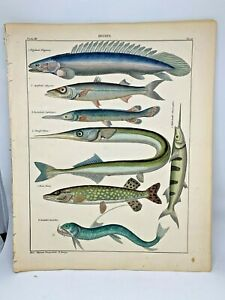 Antique-large-hand-colored-print-1843-Oken-039-s-Naturgeschichte-Plate-56-Fish