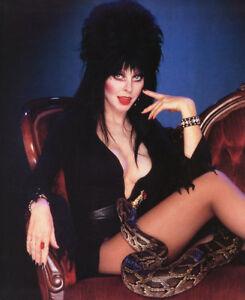 Cassandra-Peterson-aka-Elvira-Mistress-of-the-Dark-UNSIGNED-photograph-N845