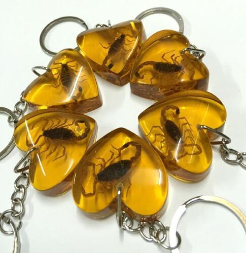 holiday gift 30 pcs specimen scorpion lovely style keychain