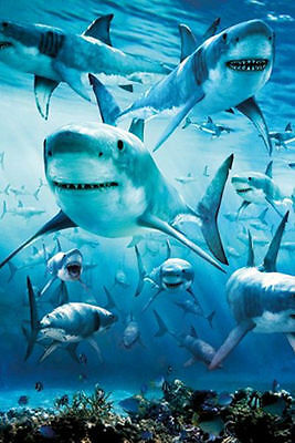 NATURE REEF 33603 SHARK INFESTED WATERS 24x36 SHRINK WRAPPED OCEAN POSTER