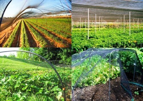 """Bird Netting 50/' X 50/' Net Netting For Bird Poultry Avaiary Game Pens 1/"""" Hole-51"""
