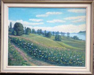 Viottolo-di-Campagna-con-Blossom-Prato-Am-Fiume-Reno-Paesaggio-D-039-Estate