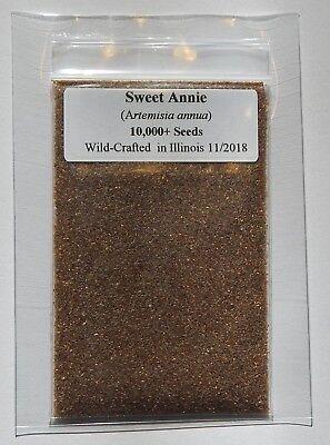 Nice 10,000 wormwood Qing Hao Artemisia Annua Seeds Fresh 2018 Organic Sweet Annie