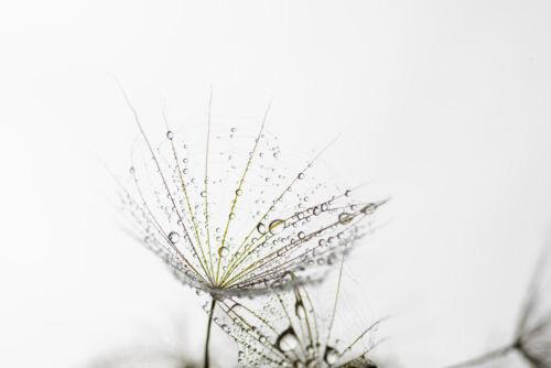 KÜCHENRÜCKWAND ✔ GLAS FÜR KÜCHE NISCHENRÜCKWAND SPRITZSCHUTZ FLIESENSPIEGEL ✔