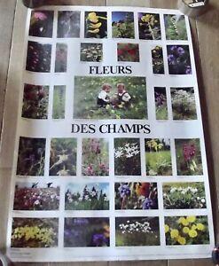 Ancienne Affiche Botanique Fleurs des Champs 60 x 90 cm Dent de Lion Coucou Dame