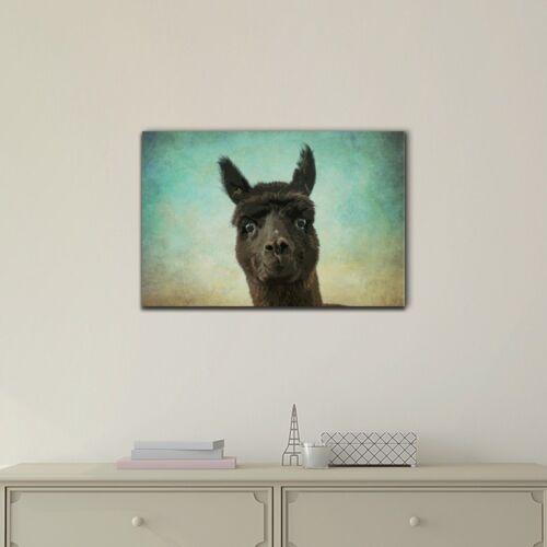 wall26 Wild Animal Canvas Wall Art A Black Alpaca Ready to Hang 24x36