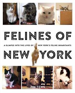 Felines of New York by Jim Tews (2015, Paperback)