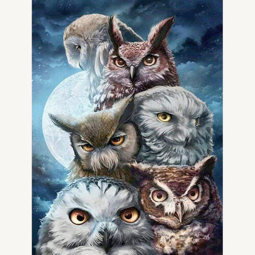 Full Drill Round or Square Drill Diamond Painting Kit Owl Family Z062D