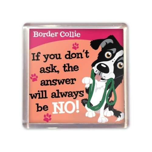 WAGS /& MOUSTACHES Border Collie Aimant NOUVEAU 00204010004