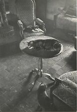 POSTCARD / CARTE POSTALE / PHOTO DIDIER DELATTRE / QUIETUDE EN MORVAN / CAT CHAT