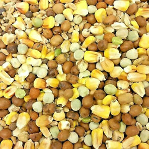 PIGEON-MIX-500g-1kg-3kg-5kg-10kg-20kg-Performance-Racing-Seeds-Feed-bp-Food-vf