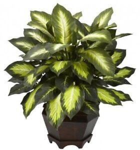 medium house plant golden leaf tropical palm tree indoor decor