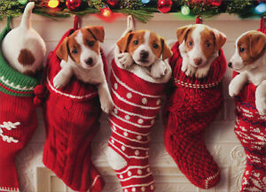 image is loading puppies hanging in christmas stocking 10 funny dog - Funny Christmas Stockings