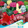 FD1172 Mixture Of Cactus Flower Colorful Plant Seeds ~1 Bag 10 Seeds~ Free Ship
