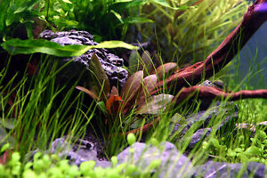 Rare Freshwater Aquarium Fish Car Interior Design