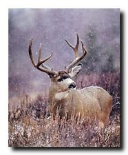 Mule Deer Antler Rack Animal Wall Decor Wildlife Art Mahogany Framed Picture