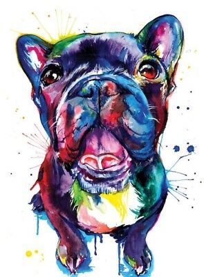 """Colourful french bulldog wall art printed on canvas 22/'/' X 16/"""" solid frame"""