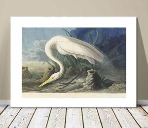 """FAMOUS BIRD ART ~ CANVAS PRINT  24x18"""" ~ JOHN AUDUBON ~ Snowy Egret"""