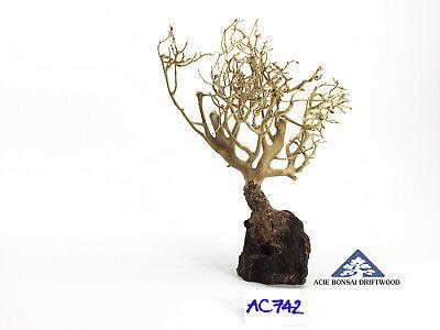 Multi Nice Models Aqua Bonsai Driftwood Nano Moss Tree Shrimp Fish Aquascape