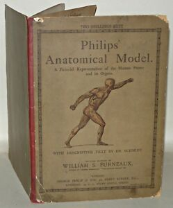 Philips-Anatomical-Model-Text-By-Dr-Schmidt-William-S-Furneaux-c1920