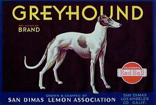 GREYHOUND~DOG~RARE 1920s ORIGINAL SAN DIMAS CALIFORNIA LEMON FRUIT CRATE LABEL