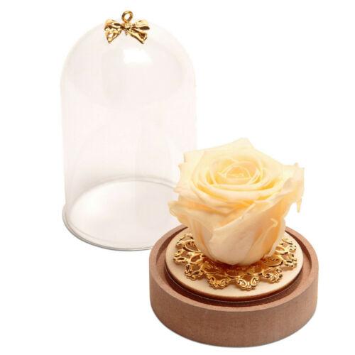 Ewige Rose im Glas Glaskuppel aus Plexiglas Rosenbox konservierte Blume Geschenk