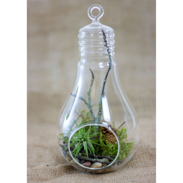 Glass Bulb Terrarium Hanging Air Plant Candle Holder