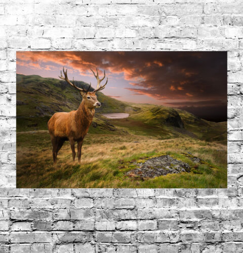 STUNNING SCOTTISH HIGHLAND RED STAG CANVAS #15 QUALITY WALL ART PICTURE A1