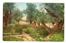 Garden Of Gethsemane - Jerusalem Photo Postcard c1920s