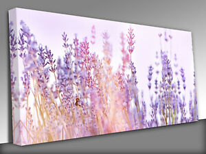 lavender flowers lit by sunlight Panoramic Canvas Wall Art Picture Print