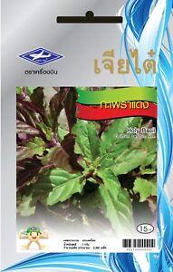 750-seeds-Thai-Holy-Red-Basil-Kaprao-Ocimum-Sanctum-Tulasi-Herb-Food-Spicy-Yard