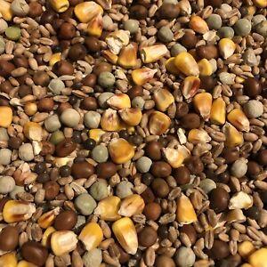 Wild Garden Bird Pigeon Food Mixed Seeds 3 kg Nutritional High Protein Fats Oil