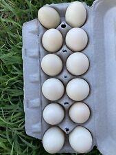 12 Fertile Duck Hatching Eggs Barnyard Mix