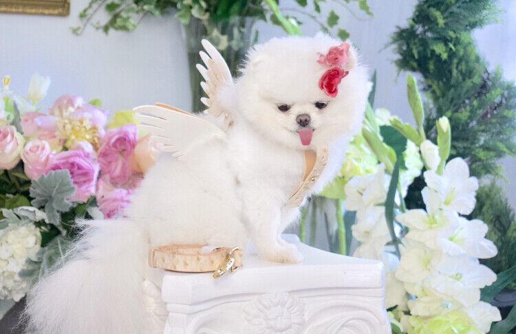 NEW  Luxury Angel Wing Pet Harness & Leash Set Tan Ostrich Dogs, Cats, Pets XS