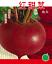 Vegetable-Garden-Retail-package thumbnail 137