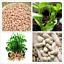 HOT 50 Pcs//Bag Peanut Seed Home Garden Rare Dried Fruit /& Vegetable Plant AB
